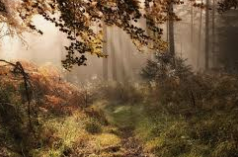 The healing properties of forest bathing